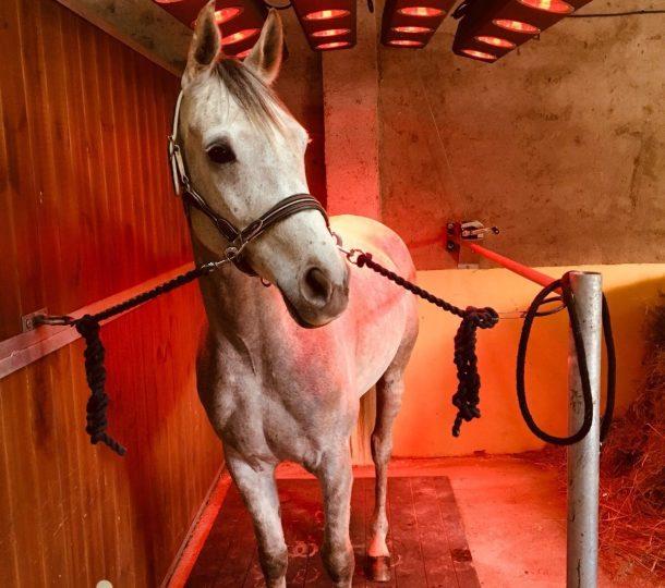 Horse Solariums
