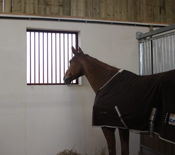 Horse in Stable by Window with Bars