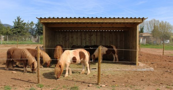 ponies in field shelter