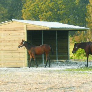 Horses with field shelter