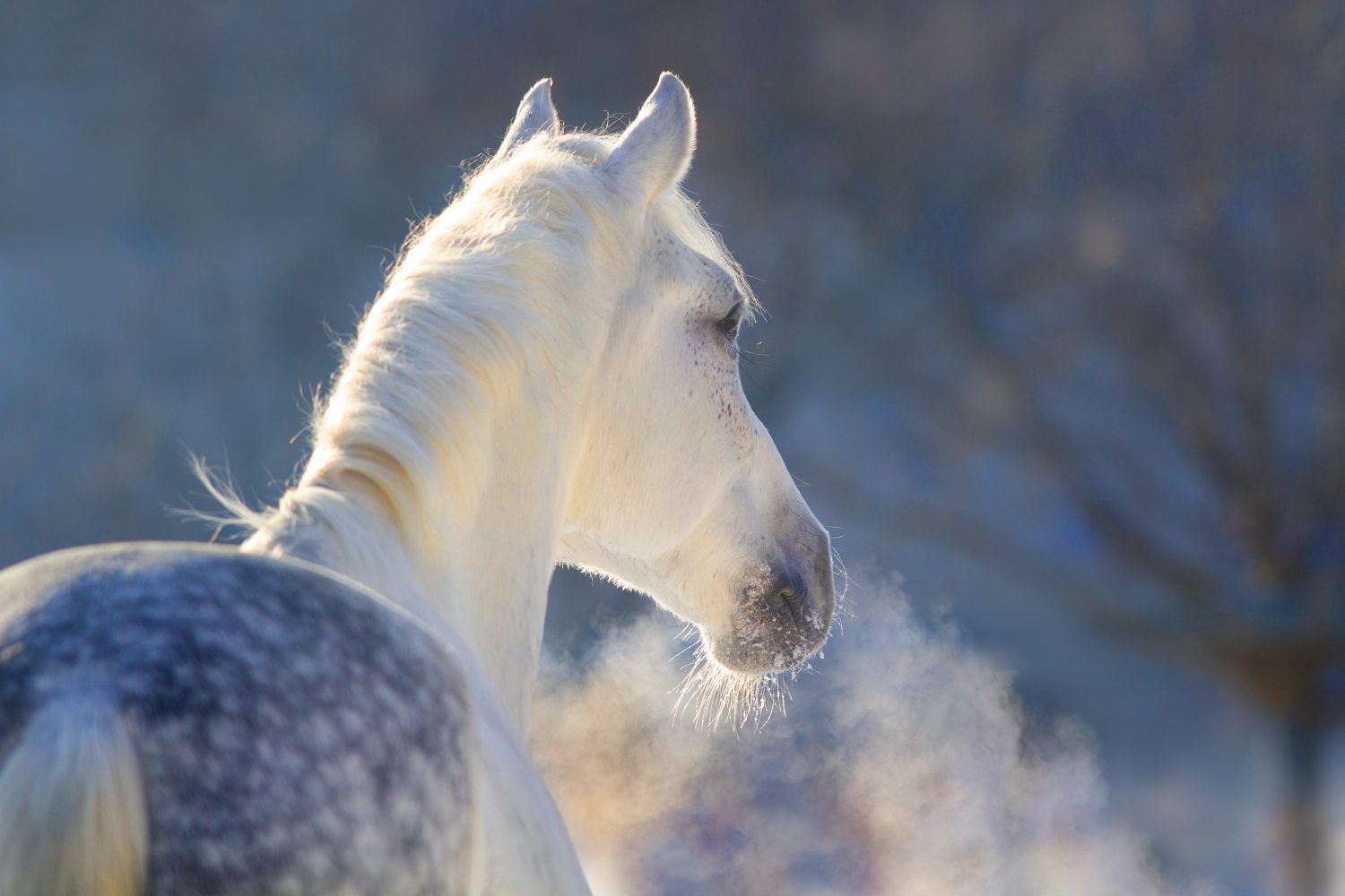 How to Keep your Horse Warm in Winter