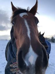 Keeping horses Warm