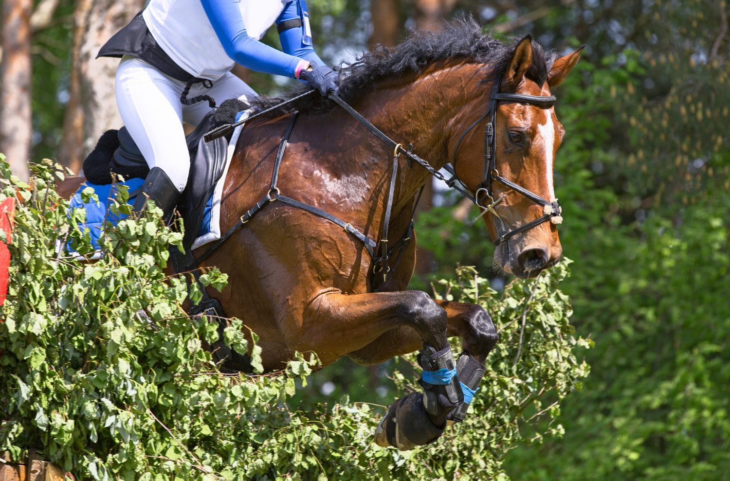 7 Top Tips for Getting Back Out Competing Again in 2021 | From A Young British Equestrian