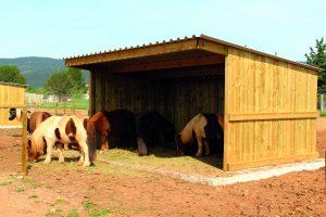 Horses in Field Shelter