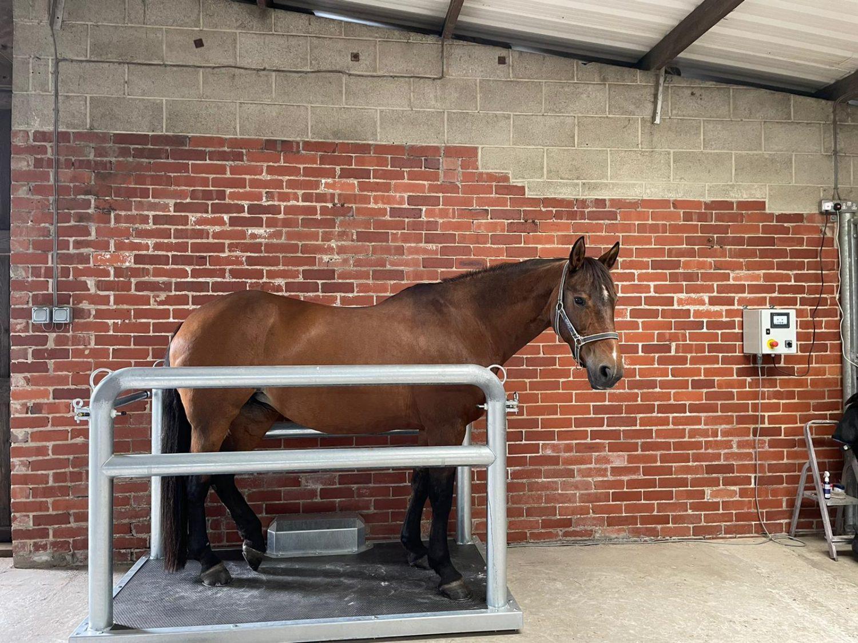 Horse Power Plate